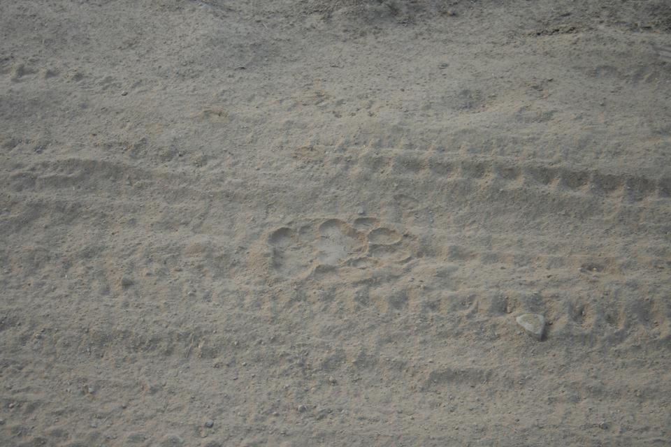tigerfootprint