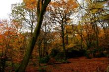 Epping Forest 2013