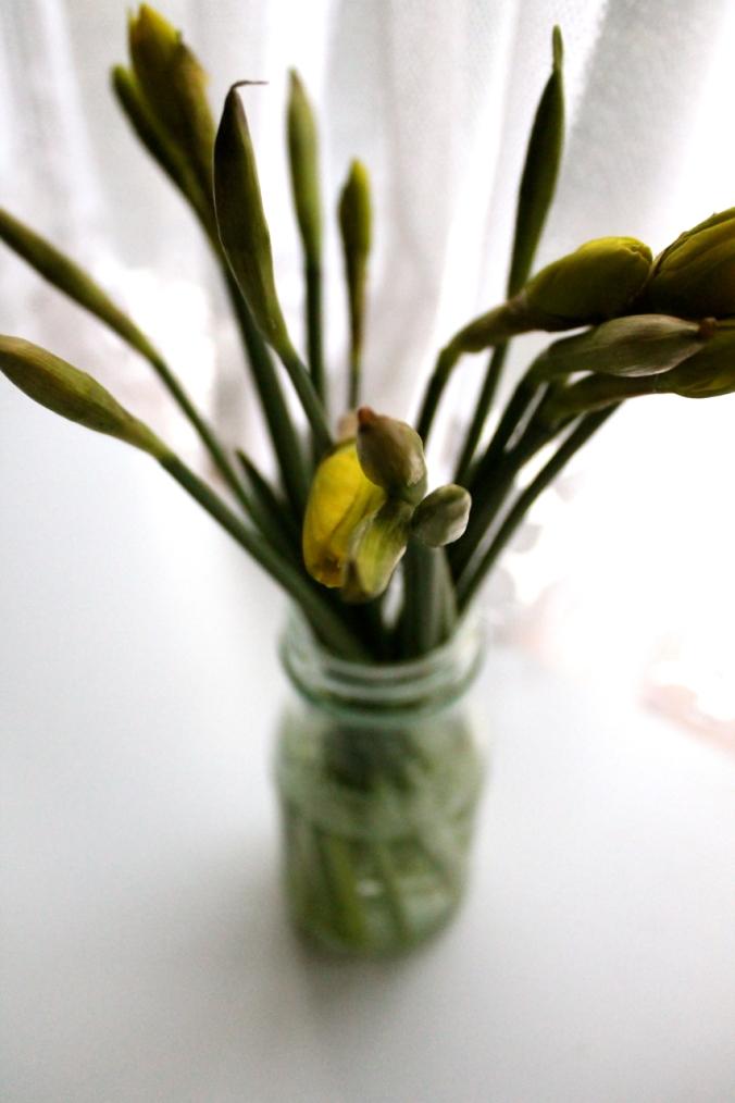 British Daffodils