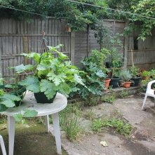 The garden as of early July.