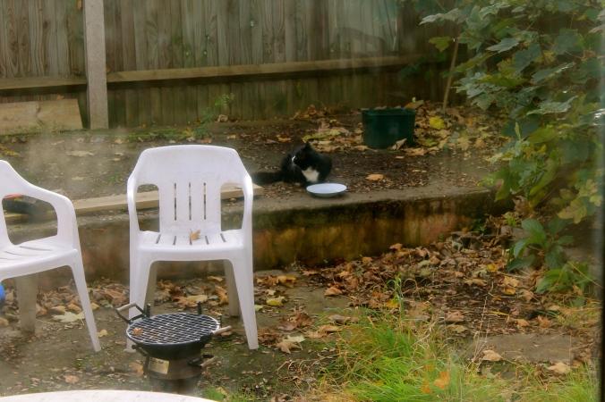 Neighbourhood kitty