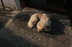 Doggy in the sunshine.