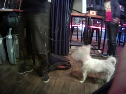 Ralph the Pub Doggie