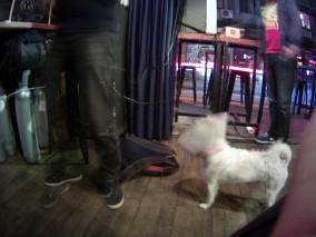 Ralph the Pub Doggie