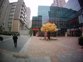 Golden tree in the square?