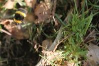 Hello, Bee!